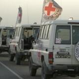 Mindst seks afghanske ansatte hos Den Internationale Røde Kors Komité (ICRC) blev onsdag dræbt af formodede medlemmer af Islamisk Stat (IS).