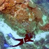 Mange dykkere og andre folk i badetøj er gennem årene begejstret gået på opdagelse i det turkisblå vand ved Great Barrier Reef ud for Australiens østkyst.