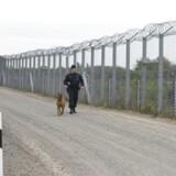En politibetjent patruljerer ved den ungarsk-serbiske grænse.