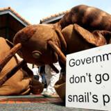 Miljøaktivister har kronede dage ved FNs klimakonference, her er to af arten klædt ud som snegle. Foto: Jewel Samad/AFP