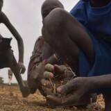 Børn i Nyal, Sydsudan indsamler korn tabt fra nødhjælpskonvoj.