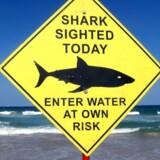 »Hajen var omkring 3,5 meter lang. Det er så rigeligt stort nok til at tage et menneske,« udtaler ejeren, der kun ønsker at stå frem som Nigel.