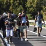 Migranter går mod den kroatisk-serbiske grænse nær byen Bezdan, 17. september 2015. Kroatien er det seneste hotspot i Europas flygtningekrise, efter flere tusinde nyankomne migranter og flygtninge har overvældet de lokale myndigheder. AFP PHOTO / ARMEND NIMANI