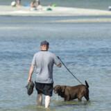 Sørg for at få rigeligt at drikke under den ekstra voldsomme hedebølge onsdag. Det gælder også hunde. Her er det badegæster ved stranden i Øster Hurup i Himmerland, mandag 23. juli.