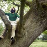 Sammen med tegneren Ole Lejbach har Jens Blendstrup skrevet bogen »Ege-ekspeditioner« om berømte egetræer i Danmark. Her fotograferet på en tur blandt Erimitagens egetræer. Foto: Niels ahlmann Olesen