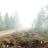 Området ved Ljusdal er normalt lukket land for både presse og lokale, fordi de svenske myndigheder ønsker at holde uvedkommende på afstand af skovbrandene. Men onsdag har man gjort en undtagelse og taget en busfuld pressefolk med ind i udkanten af branden.