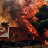 Mindst 74 personer mistede livet, da skovbrande bredte sig med lynets hast nær Athen. Brandene er de dødeligste i Grækenland i mere end ti år. (Foto: VALERIE GACHE/Ritzau Scanpix)