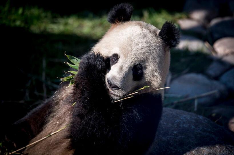 Kobenhavns Zoo Aendrede Kina Kort Vi Er Slet Ikke Interesseret I