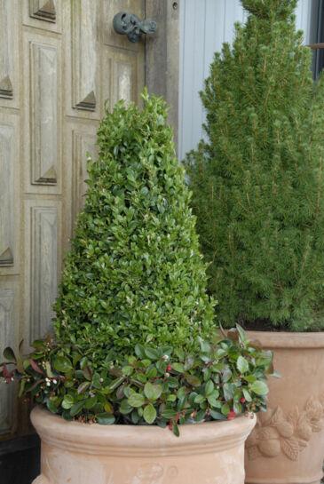 helårsplanter til krukker