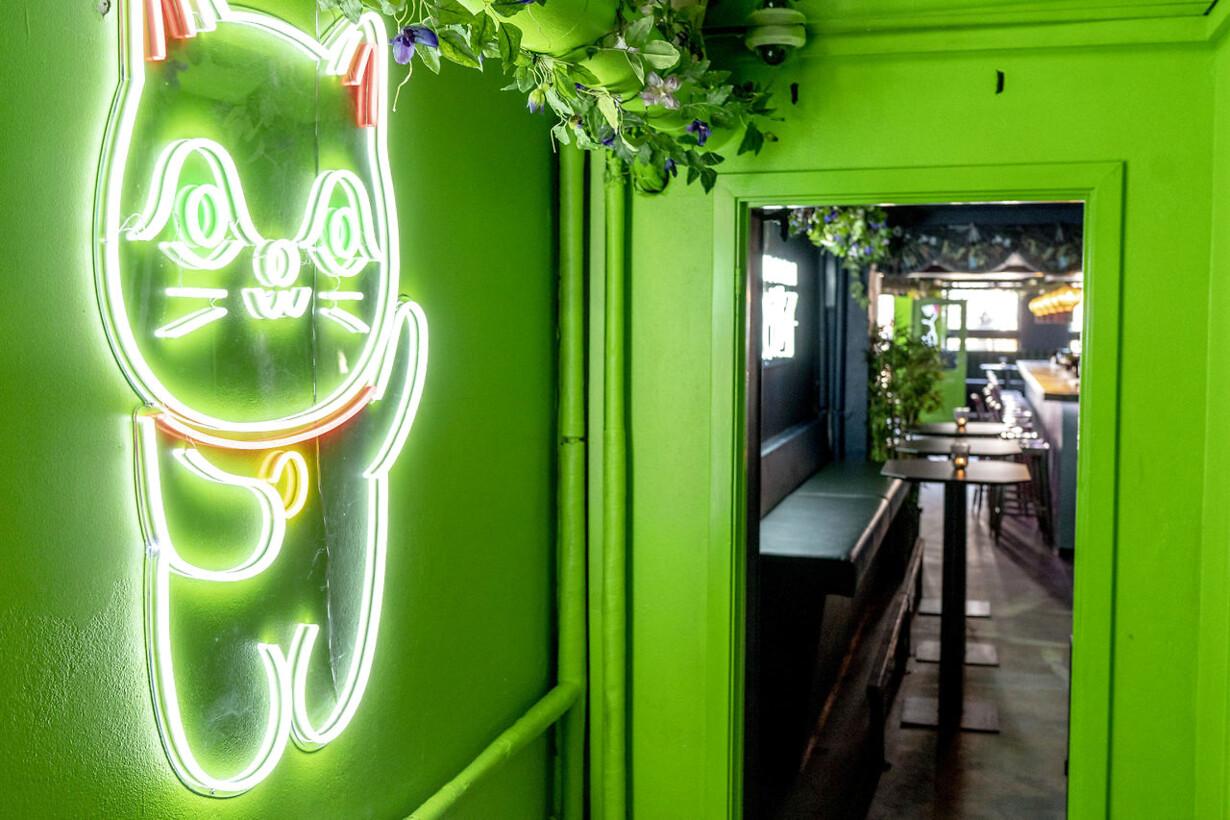 9d80439aa8d Baranmeldelse: Midt i cocktailbæltet går neonkatten sukkerbersærk
