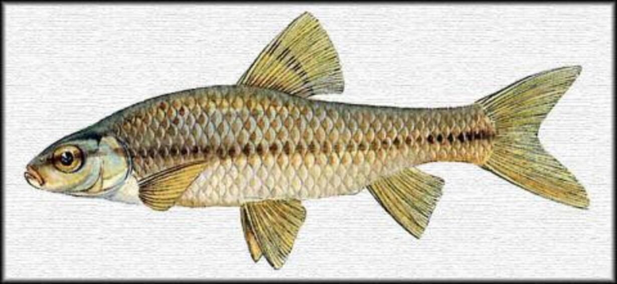 fisk i danmark
