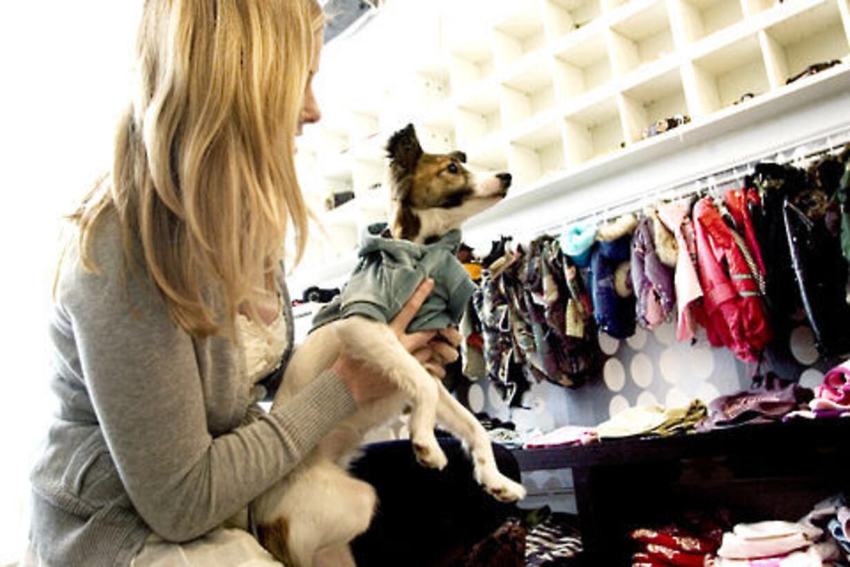 hunde forretning københavn