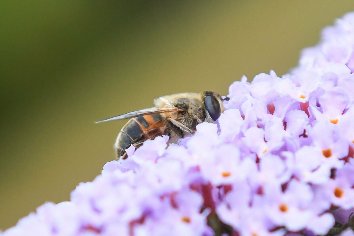 FILES-FRANCE-INSECTS-BIODIVERS
