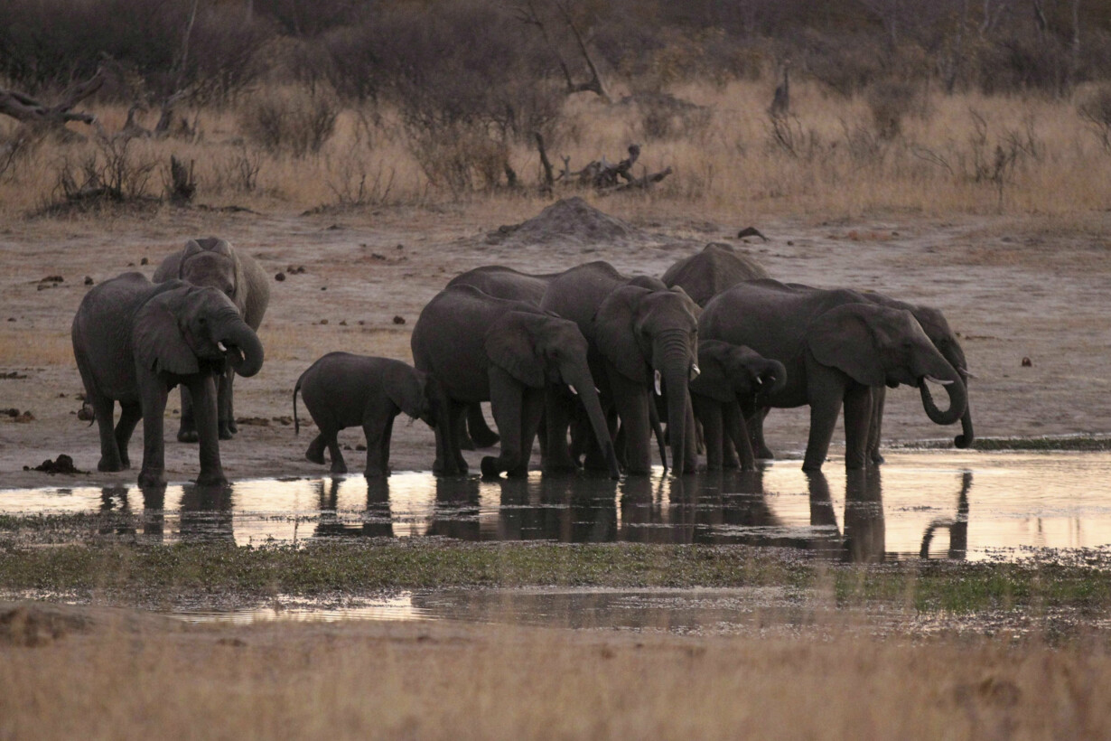 FILE PHOTO: A herd of elephant