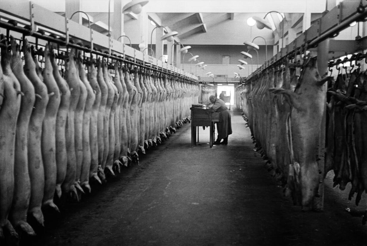 Nyslagtede svin i Kødbyen i København, 1940