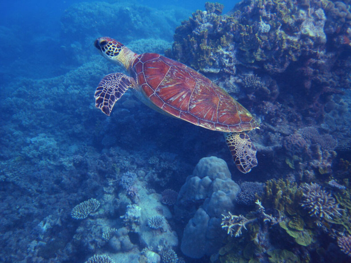 dykning filippinerne