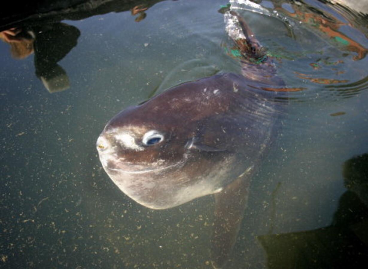 Juleleg 4: En lille fisk rejste... - 1