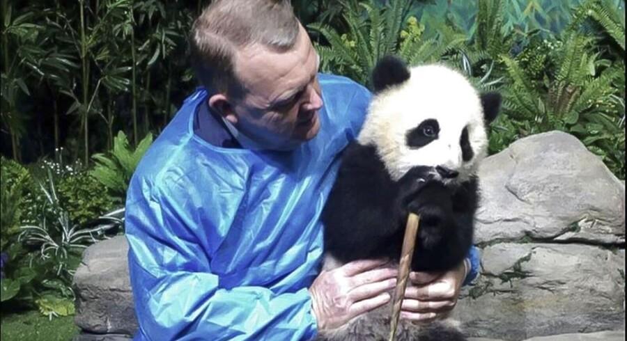 Statsminister Lars Løkke Rasmussen (V) mødte tirsdag 2. maj 2017 de to pandaer, der skal sendes til København, under et besøg i Chengdu Panda Base, hvor de to pandaer indtil videre bor. (Fra Lars Løkkes Twitter-konto/Ritzau Foto).