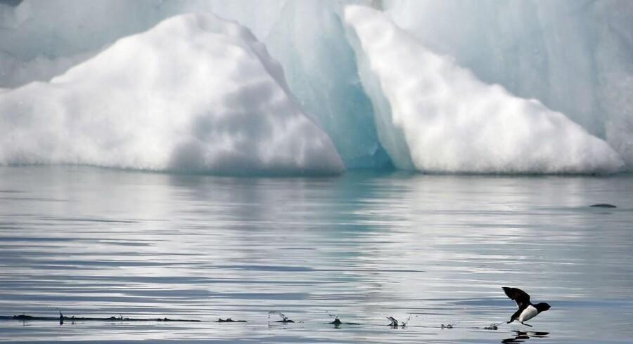 »Den var på vej fra Pyramiden på Svalbard til Barentsburg. Vi fik først besked om, at helikopteren var forsinket, men vi fik senere melding om, at den var styrtet i havet,« siger redningsleder Tore Hongset til NTB.