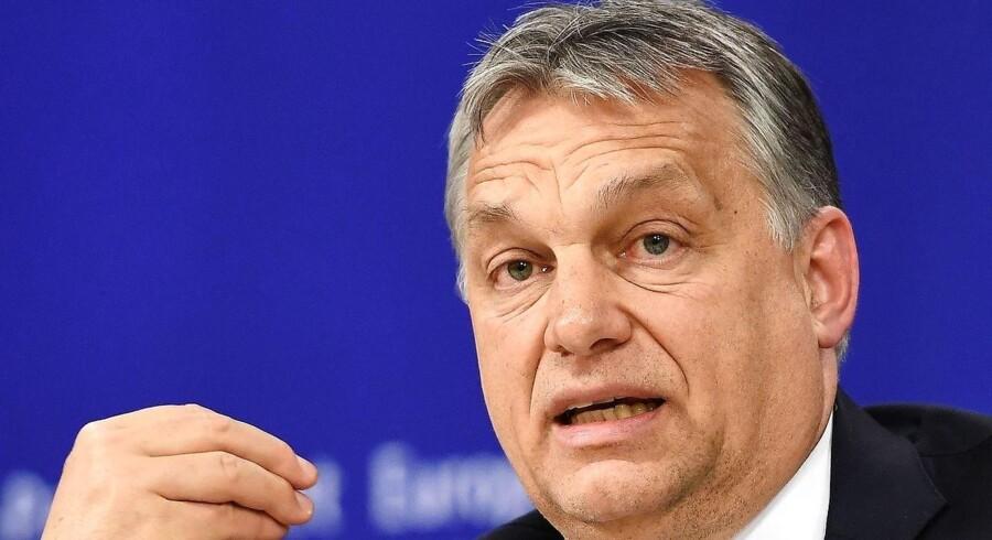 Ungarns premierminster, Viktor Orbán, stillede onsdag op til debat i EU-Parlamentet. Orbán er under stor kritik fra egne europæiske søsterpartier på grund af en ny universitetslov, der kan lukke et af landets mest anerkendte universiteter. Samtidig har en »Stop Bruxelles«-kampagne chokeret i den stærkt proeuropæiske partigruppe EPP, som Orbáns Fidesz-parti er medlem af. Lørdag skal Orbán derfor stå skoleret for EPPs ledelse. / AFP PHOTO / EMMANUEL DUNAND