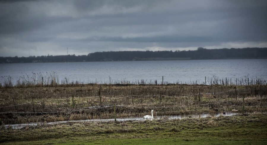 ARKIVFOTO Roskilde fjord ved udløbet af Havelse å mellem Frederikssund og Frederiksværk fotograferet d. 11. februar 2016. Foto: Asger Ladefoged/Scanpix 2016