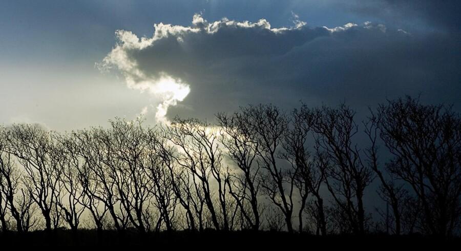 I den kommende uge kan vi se frem til et par dage med efterårssol, forudser DMI tidligt mandag morgen. Scanpix/Katrine Damkjær/arkiv
