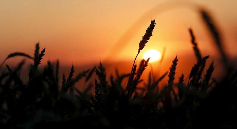 Rusland har 220 mio. hektar landbrugsjord svarende til 20 procent af verdens dyrkede landbrugsarealer.