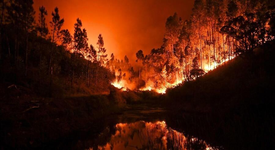 Historisk skovbrand spredte død i Portugal. Flere end 60 personer mistede livet i en voldsom skovbrand i det centrale Portugal. Mange af de omkomne brændte ihjel i deres biler. Nu er også Spanien truet af naturkatastrofen, som har resulteret i en evakuering af mere end 300 personer.