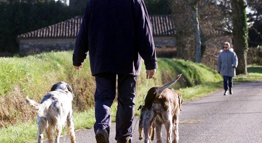 Lær dit barn, at man aldrig bare klapper en fremmed hund uden at have spurgt ejeren. Free/Colourbox