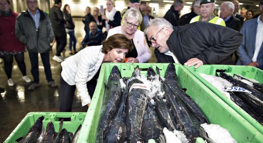 Arkivfoto: Danmarks Fiskeriforening og fiskeriminister, Karen Ellemann (V), ville have højere torskekvote i den vestlige Østersø. Det anbefaler biologiske rådgivere, men det vandt ikke gehør i ministerrådet.