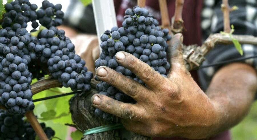 6.000 år gamle vinrester er fundet i en siciliansk grotte - viser at den italienske vinproduktion er flere tusinde år ældre end hidtil troet.