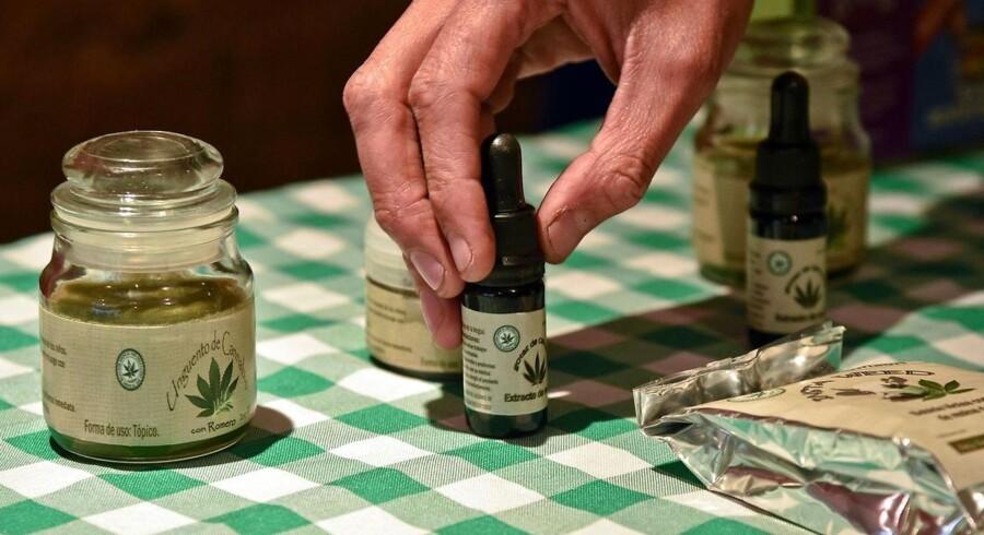 Et stort antal patientorganisationer presser på for, at syge kan få hjælp fra lægemidler baseret på naturlig cannabis, for eksempel tørrede plantedele i pulverform, som kan indtages gennem olier, te eller dampe. Arkivfoto.
