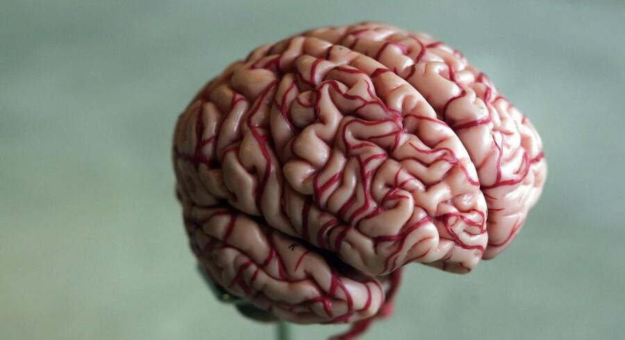 Professor Leif Østergaard fortæller sjovt og lærerigt i sin lille bog om hjernen.