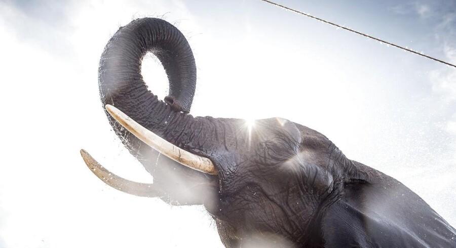 Hvor mange elefanter vejer 1.500 milliarder egentlig? Det kan du få svaret på i grafikken herunder.