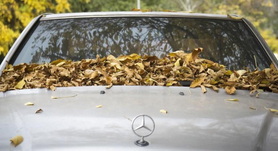 De seneste 12 år har skruppelløse bileksportører udnyttet Skats selvanmelderordning og malket statskassen for millioner af kroner årligt ved eksport af brugte biler., skriver Rune Olsen.