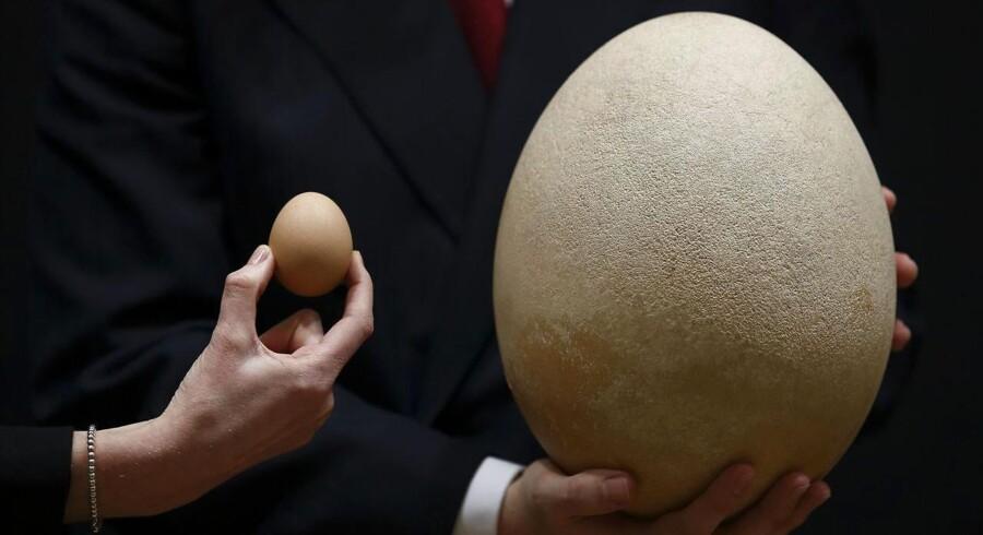 Madagaskars uddøde elefantfugl lagde æg af en størrelse, der trodser fantasien - her sammenlignet med et hønseæg under en auktion i auktionshuset Christie's. Men hvorfor forsvandt elefantfuglen egentlig?