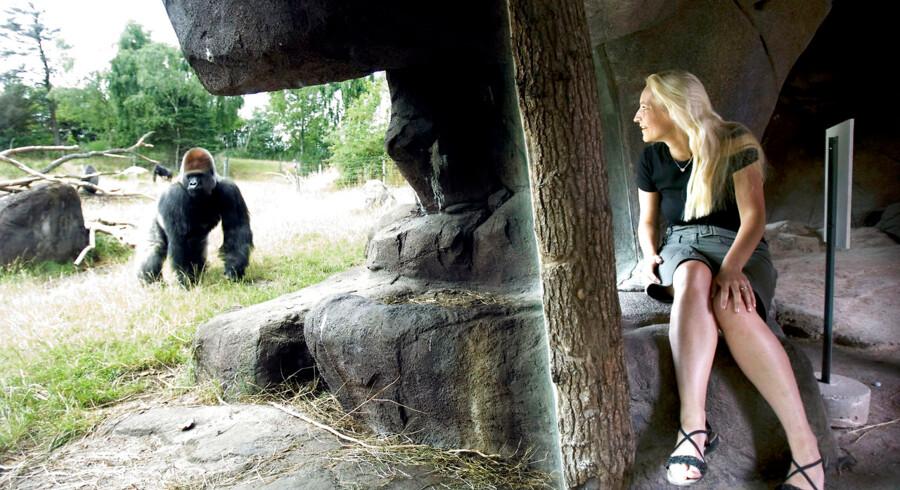 Samson i Givskud, Jill Byrnit med gorillaer.