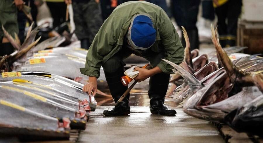 De sidste tun er nu blevet inspiceret og solgt på det historiske Tsukiji-fiskemarked i Tokyo. Markedet flytter fra området, hvor der nu er blevet solgt fisk i flere hundrede år.