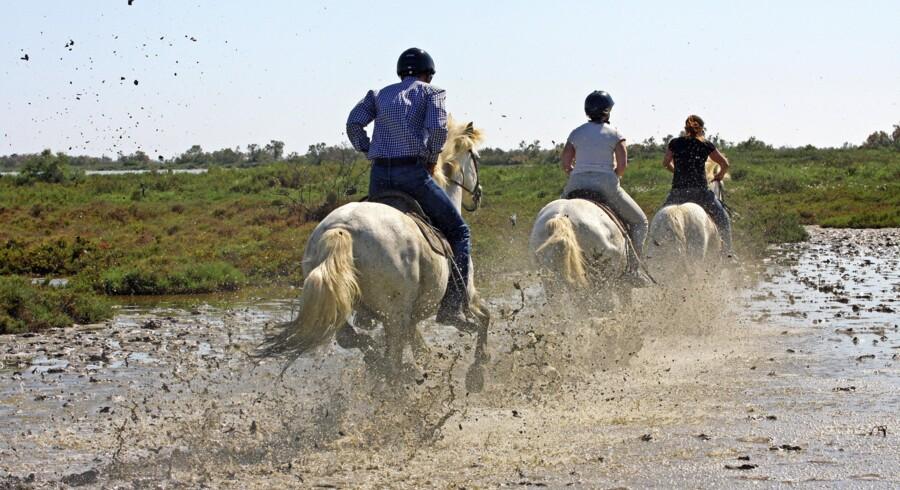 Er man til galop, indfrier hestene hellere end gerne ønsket. Efter en tur igennem sumpen bliver de vasket, mens rytterne må have gang i vaskemaskinen. Fotos: Jens Henrik Nybo