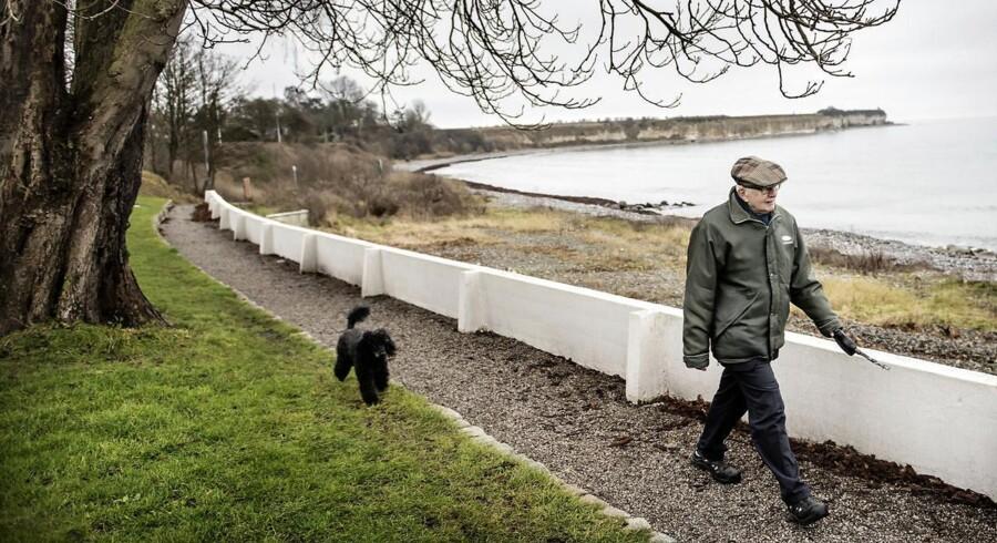Ib Grønvaldt har været medlem af Venstre i 51 år. I dag er han menigt medlem af i Faxe-kredsen og går her tur med Stevns Klint i ryggen.