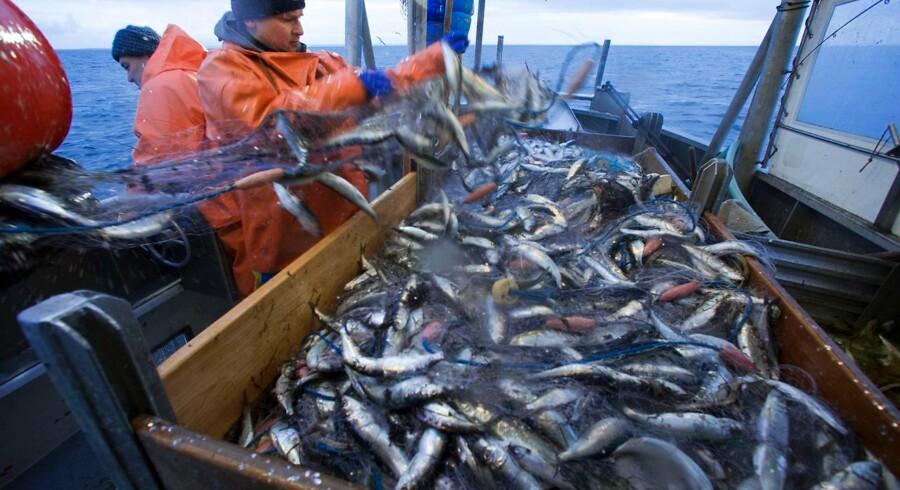 (ARKIV) Miljøgruppe kræver stop for sildefangster i del af Østersøen, mens danske fiskere vil kæmpe for højere kvote.