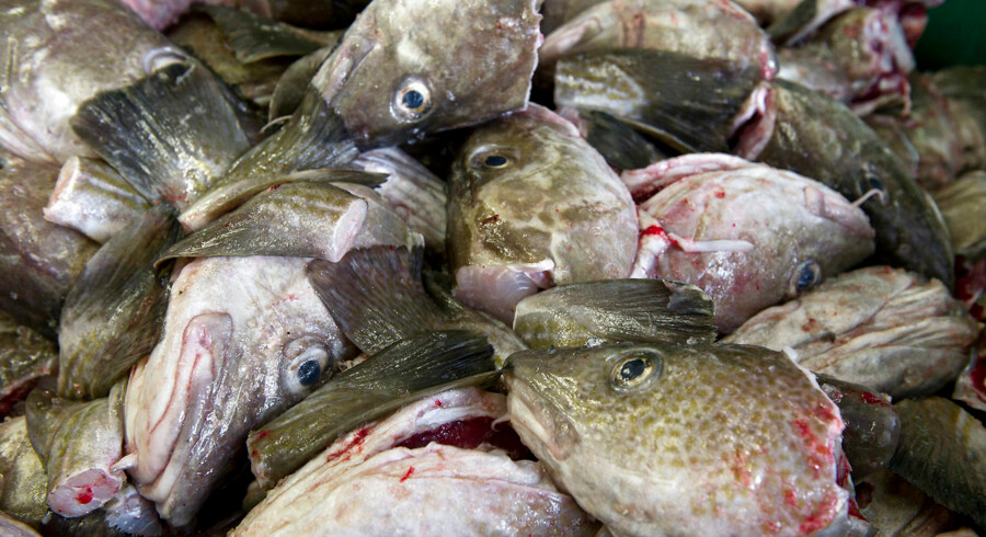 De danske fiskerimyndigheder har modtaget millioner af kroner i EU-tilskud for bl.a. at administrere og kontrollere fiskerne – alligevel har kontrollen ikke været god nok.