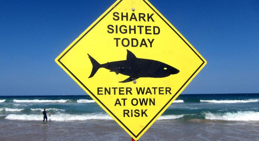 Der havde ikke været et alvorligt hajangreb ved øgruppen Whitsundays i otte år, indtil de seneste måneders tre angreb. Mandag mistede en mand livet. Billedet viser et advarselsskilt fra en strand i Australien. David Gray / Reuters/Reuters