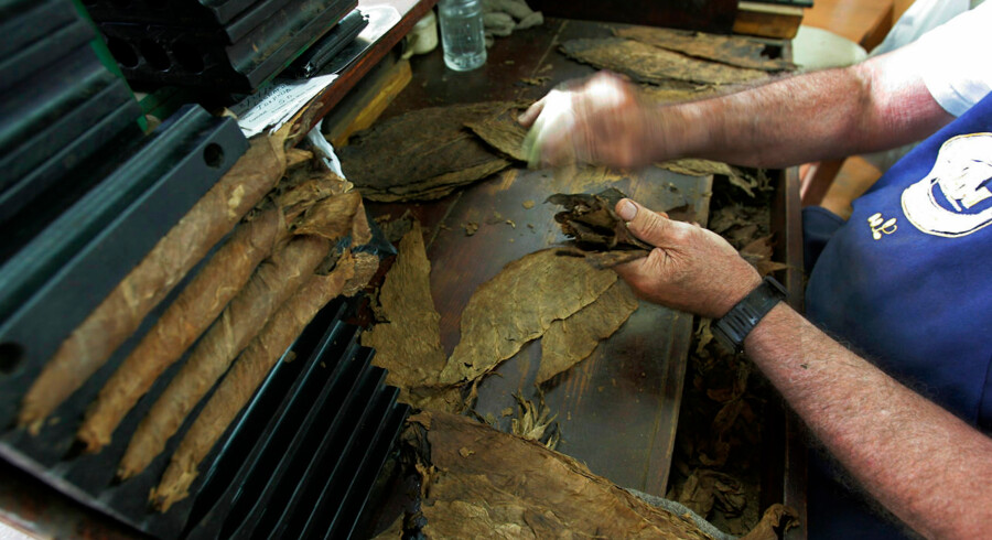 "Leo Pedraza bunches tobacco leaves together before starting to roll a cigar at the El Credito Cigar Factory in the Little Havana district of Miami 23 August 2006. The factory, located in Calle Ocho street for some 35 years, produces some 1, 400 hand rolled tobaccos daily. The workers clean the leaves, roll and pack the cigars, and are paid anywhere from 46 cents to 72 cents per unit. A ""roller"" will produce about 150 cigars a day. Cuban-born Leo worked as a roller in Cuba for 38 years before comming to the US. He has been rolling cigars since his arrival here 11 years ago. AFP PHOTO/Roberto Schmidt"