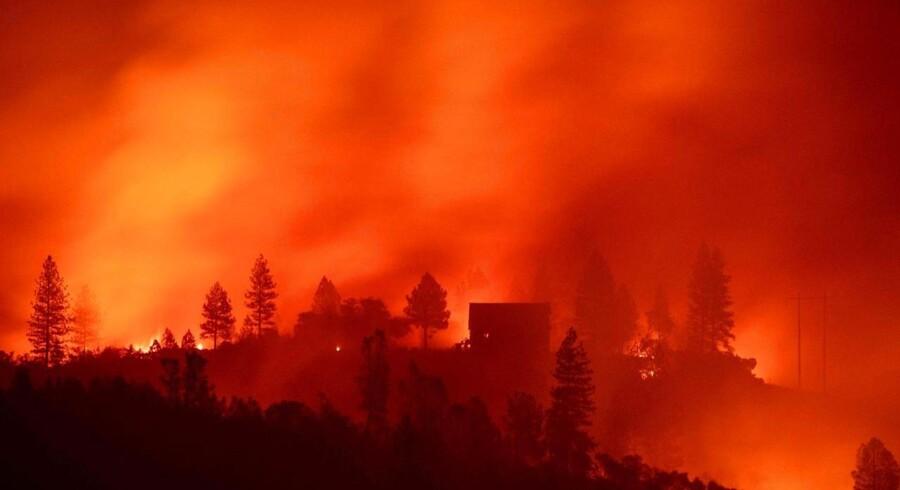 I og omkring byen Paradise i det nordlige Californien er mindst 23 mennesker omkommet i omfattende brande, der hærger et område næsten lige så stort som Bornholm.