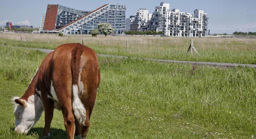 Der er bynær natur på Vestamager ikke langt fra Københavns centrum.