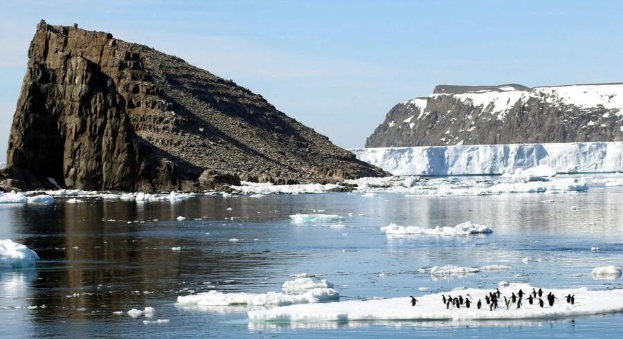 Klipperne ved kysten af Antarktis kan hæve sig så meget, at de kan komme til at virke som en barriere mod katastrofale havstigninger.