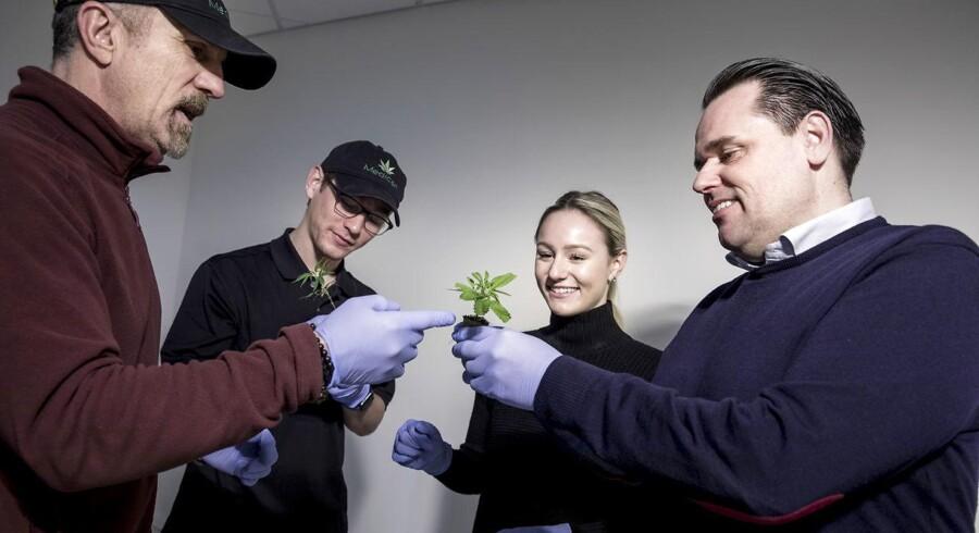 Medican i Nordsjælland er godkendt til at dyrke medicinsk cannabis og har fået de første stiklinger fra Østrig. De bliver her vurderet af fra venstre amerikanerne Daniel Grabowski, H. Gunner Heard og Danielle Grabowski, og yderst til højre ses Brian Mertz.