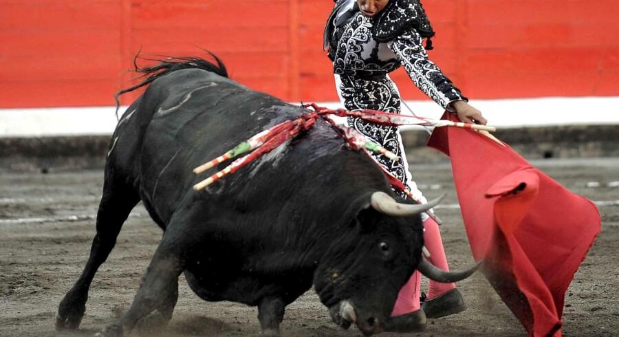 Tyrene er blevet dvaske, mener kritikere i Spanien. Derfor sætter man sin lid til en klonet kamptyr, der netop er kommet til verden. Her kæmper Jose Pedro Pardo mod en tyr i Bilbao i søndags.