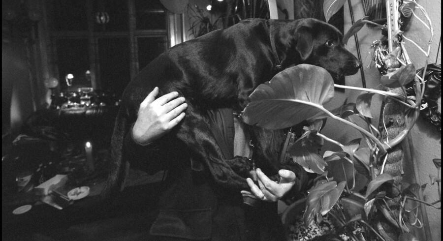 Narkohundens gode næse var millioner værd.